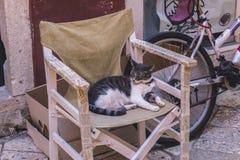 猫 免版税库存图片
