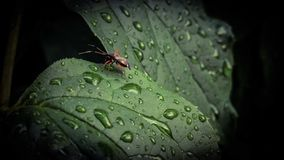 None. Bug after rain makro mobilefoto Royalty Free Stock Photo