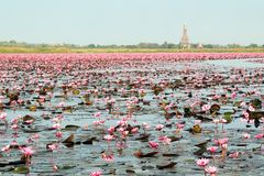 Nong Harn Lake, Udon Thani Stock Afbeeldingen
