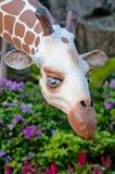Nong Nooch Park girafe Lizenzfreies Stockfoto