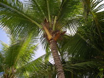 Nong Nuch热带庭院  免版税库存图片
