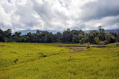 Nong Pak Chee grassland in Khao Yai National Park Stock Images