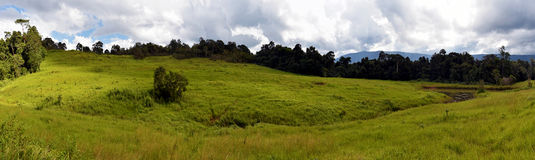 Nong Pak Chee grassland Panorama in Khao Yai National Park Royalty Free Stock Photo