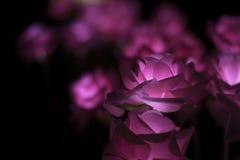 Nong Prajak Jawnego parka Udon Thani, Tajlandia bokeh PROWADZĄCY kwitnie kolorowych iluminujących plastikowych światłowody w zmro Fotografia Royalty Free