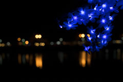 Nong Prajak Public Park Udon Thani, Thailand bokeh LED flowers colorful illuminated plastic optical fibers in dark back.  stock photo