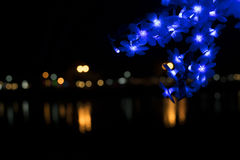 Nong Prajak Public Park Udon Thani, Thailand bokeh LED flowers colorful illuminated plastic optical fibers in dark back.  stock photography