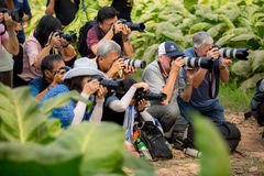 Nongkhai, Thailand-March 17, 2017 This is behind the scenes of p. Hotographer group making pictures in Tobacco farm in the morning stock image