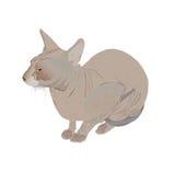 Nonhairy erwachsene Katze Lizenzfreie Stockfotografie