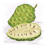 Noni fruit cross-section Stock Images