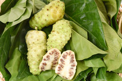 Noni fruit on leaf. Royalty Free Stock Images