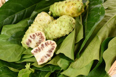 Noni fruit on leaf. Stock Image