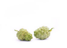 Noni Fruit, Morinda citrifolia Stock Photo