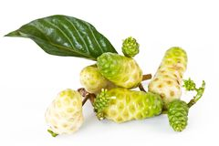 Noni fruits Stock Photo