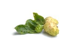 Noni frukt för hälsa och ört för hälsa som isoleras på vitbaksida Royaltyfri Bild