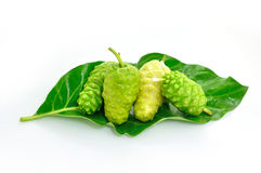 Noni herb Royalty Free Stock Images