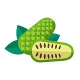 Noni owoc i liścia wektoru ilustracja Superfood morinda cit ilustracji
