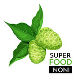 Noni vector icon. Healthy detox natural product superfood illustration for design market menu superfood Royalty Free Stock Photography