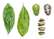 Nonifruit ,Noni leaf ,Noni sliced Royalty Free Stock Photography