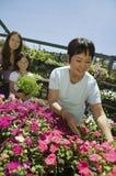 Nonna che seleziona i fiori nella scuola materna della pianta con il derivato e la nipote Fotografie Stock