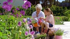 Nonna e ragazza che piantano i fiori al giardino archivi video