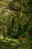 Nono, лес облака эквадора Стоковая Фотография RF