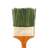 Nontoxic paint concept. Green grass as bristles in a four inch paintbrush Stock Images