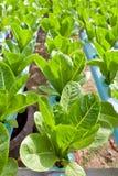 Nontoxic vegetable garden Stock Images