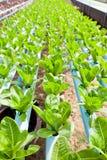 Nontoxic vegetable garden Royalty Free Stock Photo