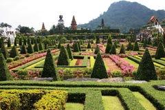 nooch nong сада тропическое Стоковая Фотография