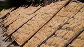 Noodle factory in Bantul, Yogyakarta, Indonesia. Noodle drying in sun at noodle factory in indonesia Bantul, Yogyakarta, Indonesia stock footage