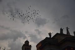 Nooit meer of enkel een paar vogels? stock afbeeldingen