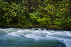 Nooksack River. Stock Photos
