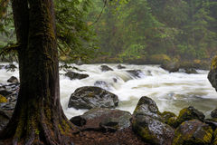 Nooksack River. Royalty Free Stock Photos