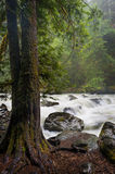 Nooksack River. Royalty Free Stock Image