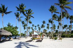 Noon at sea in the Dominican Republic. High palm trees, sandy lonely beach. Beautiful blue sky royalty free stock image