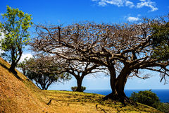 Noon trees landscape. Trees at high noon on the island of Tobago West Indies Royalty Free Stock Photos