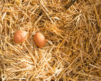 Noon. Two fresh eggs are in the sunlight in the strow Stock Photography