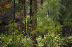 At noon, the woods Stock Images