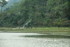 Noong trawa i jezioro Zdjęcie Royalty Free