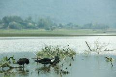 Noongmeer en eend op meer Stock Afbeelding