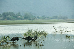 Noongmeer en eend op meer Royalty-vrije Stock Afbeeldingen