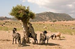 Noord-Cyprus Karpazi - stock foto's