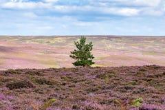 Noord-York legt landschap, het UK vast Royalty-vrije Stock Foto