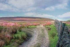 Noord- Yorkshire legt vast stock fotografie