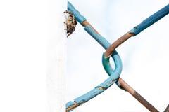 Noordamerikaanse het Springen Spin Stock Afbeelding