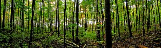 Noordelijk Boreaal Bos Royalty-vrije Stock Foto