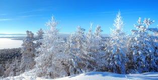Noordelijk bos Royalty-vrije Stock Afbeeldingen