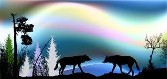 Noordelijk landschap met dageraad en twee wolven en silhouetten van bomen royalty-vrije stock foto's