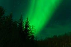 Noordelijke Lichten achter een bos Stock Foto's