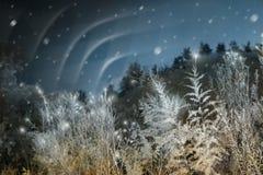 Noordelijke Lichten bij Kerstmis royalty-vrije stock fotografie